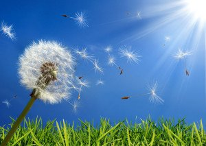 5 Ways to Triumph Over Spring Allergies