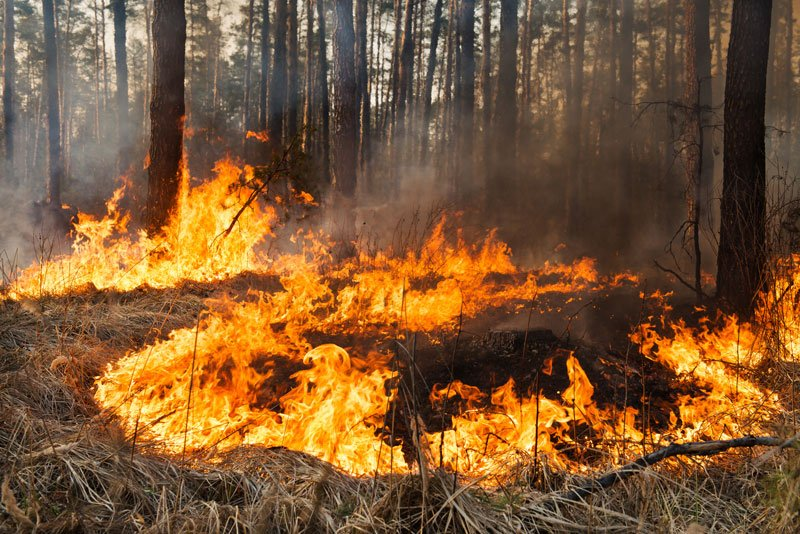 Be Ready for a Wildfire with Help from This Mobile App