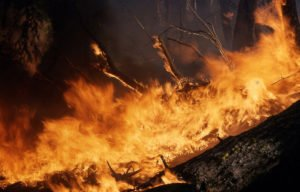 Is Your Home Covered Against Wildfire Damage?a wildfire in the forest