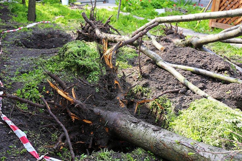 a tree fallen over